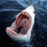 Пожиратель акул приковал внимание миллионов в сети (ВИДЕО)