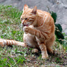 Героический кот спас маленького мальчика от злого пса (ВИДЕО)