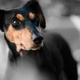 Запасшийся кормом после урагана пес восхитил соцсети