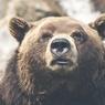 Столичные медведи не выходят из спячки