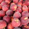Жители смоленского села приноровились гнать экономный самогон из санкционных персиков