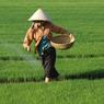 Депутаты поддержали проект по сдаче сельхозугодий китайцам