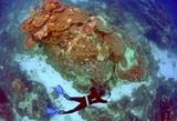 Глобальное потепление убивает Большой Барьерный риф