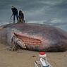 На Камчатке на берег моря выбросился кашалот