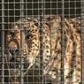 Спасатели добрались до животных из зоопарка в Уссурийске