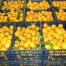 Россельхознадзор вернул на Украину 700 тонн овощей и фруктов