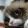 «Сердитый котик» принес хозяйке 99,5 млн долларов