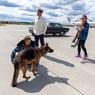 Хоть за перелет собаки и заплачено: на разгрузке багажа в Шереметьево снова покалечили пса