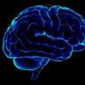 Диабет может привести к сокращению объема мозга