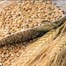 Румыния отказалась продавать зерно другим странам во время пандемии