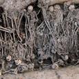 Ученые обнаружили в Поволжье России самые ранние следы Черной смерти