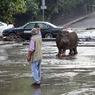 В Тбилиси выловили всех сбежавших из зоопарка животных