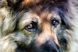 В Твери бездомные собаки спасли утопающего