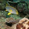 Обед в подводном царстве на Мальдивах