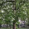 В Москву идет рекордная жара, в Поволжье она уже неделю