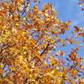 В выходные во многие регионы России придёт настоящая осень