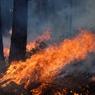 Не менее 76 человек погибли во время лесных пожаров в Калифорнии, более 1000 пропали