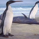 Ученые: Найденный в Новой Зеландии гигантский пингвин был ровесником динозавров