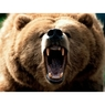 Медведь растерзал рыбака в Хабаровском крае