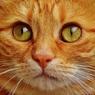 Ученые измерили уровень интеллекта котов