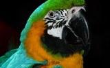 Видео, как попугай поет   песню Эминема и Рианны,  стало хитом