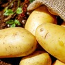 Россельхознадзор опроверг введение запрета на выращивание картошки на даче