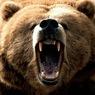 Очевидцы записали на видео нападение медведя на посетителей цирка на Украине