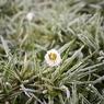 В Москве на Рождество установится 30-градусный мороз