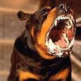 На юго-востоке Москвы введен карантин из-за бешеного животного