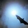 Австралию засыпало трупами летучих мышей