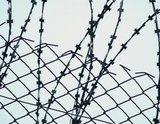 Заключенные сообщили об изнасилованиях палками под Rammstein