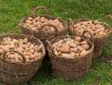Подорожали картофель и морковь, курица и яйца - на очереди?