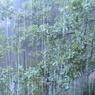 На Москву за день выпала почти половина месячной нормы дождя