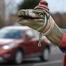 Динозавры имели все шансы выжить - им фатально не повезло (ФОТО)