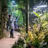 Как Кадырова: Instagram заблокировал страницу ботанического сада МГУ