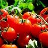 Россельхознадзор попросил Казахстан лучше досматривать овощи перед отправкой их в РФ