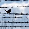 Госдума назвала возможное число амнистированных по случаю 70-летия Победы