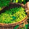 Ученые открыли необычное свойство зеленого чая