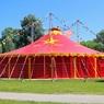 Мэр Магаса запретил в городе выступления передвижных цирков с животными