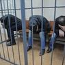 Домработница узнала двух обвиняемых в убийстве Бориса Немцова