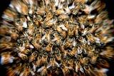 В Нью-Йорке перекрывали площадь Таймс-сквер из-за нашествия пчёл