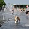 Прокуратура не выявила нарушений при перевозке собак Аэрофлотом, но станет ли псам безопаснее?