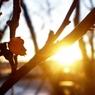 На днях в московском регионе ожидается летнее тепло