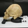 У храма в Санкт-Петербурге нашли сотни человеческих костей