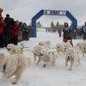 Куликово поле приглашает туристов с собаками