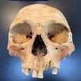 Ученые подтвердили истории Колумба о каннибалах в Карибском бассейне