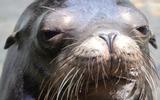 Очевидцы сняли на видео, как морской лев утащил маленькую девочку под воду