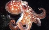 Американские ученые предположили, что осьминоги - потомки инопланетян