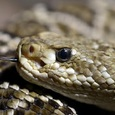 Турист скончался после укуса змеи во время прогулки в парке