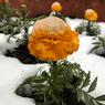 Наступление климатической весны ожидается в Москве в воскресенье